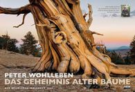 Peter  Wohlleben - Das Geheimnis alter Bäume