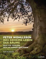 Peter  Wohlleben - The Secret Life of Trees